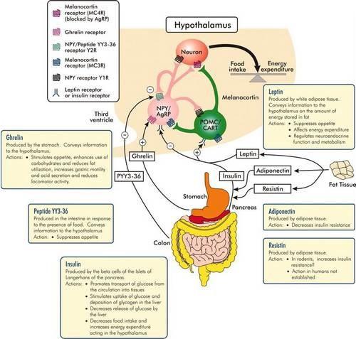 regulacja hormonalna łaknienia
